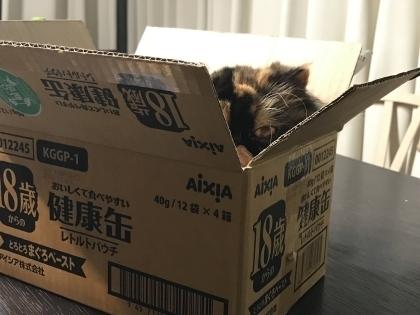 箱入りココ